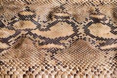 Modelo de la piel de serpiente de Python Fotografía de archivo libre de regalías