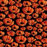 Modelo de la planta del vector de la flor de la naturaleza de la amapola Fotos de archivo