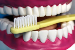 Modelo de la quijada con los dientes humanos Fotos de archivo