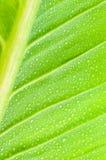 Modelo de la textura de la hoja para el fondo de la primavera con el descenso del agua, envi Fotos de archivo libres de regalías