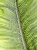 Modelo de la textura de la hoja para el fondo, el ambiente y el ecol de la primavera Fotografía de archivo