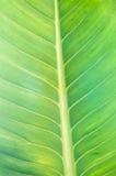 Modelo de la textura de la hoja para el fondo, el ambiente y el ecol de la primavera Imagenes de archivo