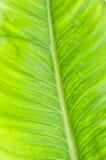 Modelo de la textura de la hoja para el fondo, el ambiente y el ecol de la primavera Foto de archivo