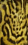 Modelo de la textura del fondo de la piel del lince imágenes de archivo libres de regalías