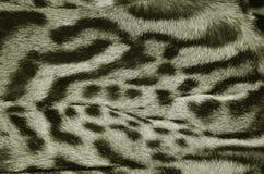 Modelo de la textura del fondo de la piel del lince fotos de archivo