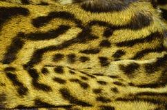 Modelo de la textura del fondo de la piel del lince fotos de archivo libres de regalías