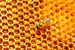 Modelo de las células de la miel Trabajo de las abejas sobre el panal Imagen de archivo libre de regalías