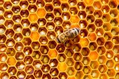 Modelo de las células de la miel Trabajo de las abejas sobre el panal Fotos de archivo