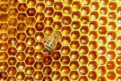Modelo de las células de la miel Trabajo de las abejas sobre el panal Fotografía de archivo libre de regalías