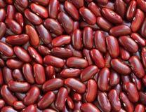 Modelo de las habas rojas como fondo Imagenes de archivo