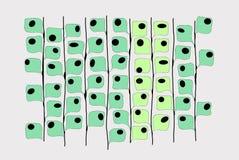 Modelo de las hojas Imagen de archivo libre de regalías