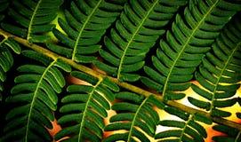 Modelo de las hojas Foto de archivo libre de regalías