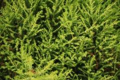 Modelo de las hojas Fotografía de archivo libre de regalías