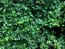 Modelo de las hojas Foto de archivo