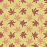 Modelo de las hojas de arce Imagenes de archivo
