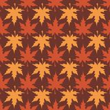 Modelo de las hojas de arce Foto de archivo