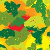 Modelo de las hojas de árboles tropicales Imágenes de archivo libres de regalías