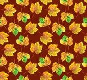 Modelo de las hojas de arce Imagen de archivo libre de regalías