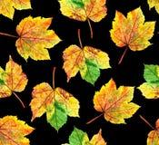 Modelo de las hojas de arce Foto de archivo libre de regalías