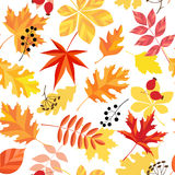 Modelo de las hojas de otoño Foto de archivo libre de regalías