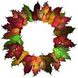Modelo de las hojas de otoño Imagen de archivo
