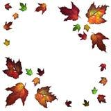 Modelo de las hojas de otoño Foto de archivo
