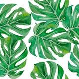 Modelo de las hojas de los monstruos para el fondo ilustración del vector
