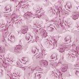 Modelo de las rosas Fotos de archivo libres de regalías