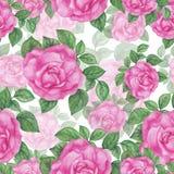 Modelo de las rosas Fotografía de archivo libre de regalías