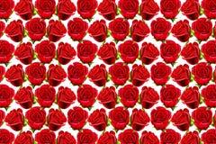 Modelo de las rosas de la tarjeta del día de San Valentín Fotografía de archivo