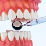 Modelo de los dientes Imagen de archivo libre de regalías