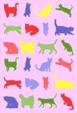 Modelo de los gatos Fotografía de archivo
