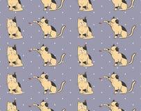 Modelo de los gatos Imagenes de archivo