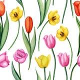 Modelo de los tulipanes Foto de archivo