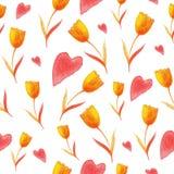 Modelo de los tulipanes Imagen de archivo libre de regalías