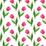 Modelo de los tulipanes Foto de archivo libre de regalías