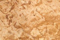 Modelo de madera, textura carelia del abedul Foto de archivo libre de regalías