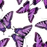 Modelo de mariposa de la acuarela ilustración del vector