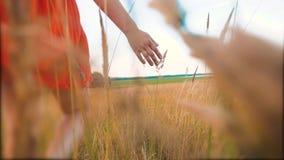 Modelo de moda del tamaño extra grande en el vídeo de la cámara lenta que camina en la hierba la mujer gorda en la naturaleza en  almacen de metraje de vídeo