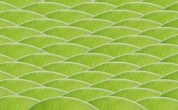 Modelo de onda verde del diseño de la hoja del plátano imágenes de archivo libres de regalías