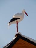 Modelo de uma cegonha no telhado no winte Fotos de Stock Royalty Free
