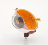 Modelo de un ojo Foto de archivo libre de regalías