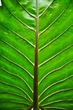 Modelo del árbol Imagen de archivo libre de regalías