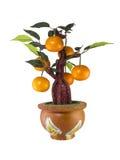 Modelo del árbol anaranjado Fotos de archivo libres de regalías