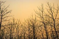 Modelo del árbol muerto Fotos de archivo