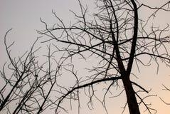Modelo del árbol muerto Foto de archivo