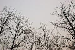 Modelo del árbol muerto Fotografía de archivo libre de regalías