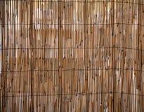 Modelo del bambú de la acometida Fotografía de archivo libre de regalías