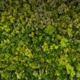 Modelo del bosque Visión desde arriba Fotografía de archivo libre de regalías