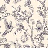 Modelo del bosquejo del vector con los pájaros y las flores Colibríes y flores, estilo retro, contexto de la naturaleza Monocromo stock de ilustración